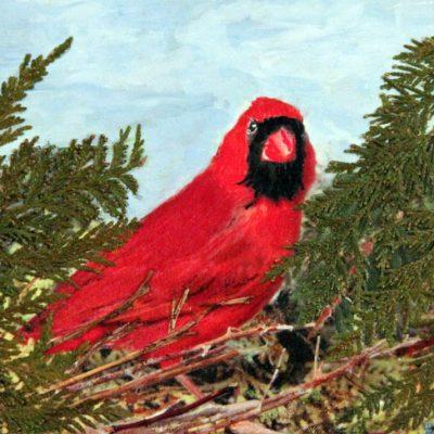 Cardinal In The Cedar
