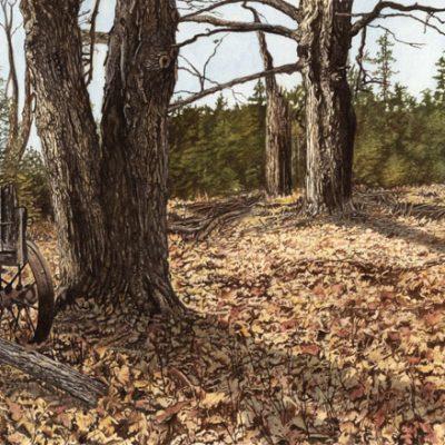 Jody's Woodland